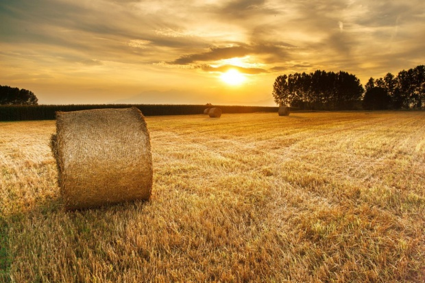 Komisja rolnictwa za ujednoliceniem zasad zatrudnienia w agencjach i inspekcjach rolnych