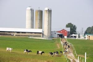 """Holendrzy są skłonni płacić więcej za mleko """"z pastwiska"""""""