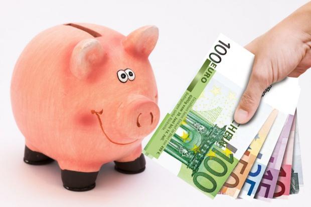 Wsparcie dla producentów świń