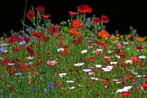 Czerwona Księga wymarłych lub zagrożonych gatunków roślin woj. podkarpackiego