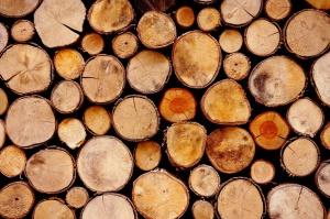 Na Podkarpaciu leśnicy zamierzają pozyskać 1,9 mln m sześciennych drewna