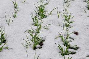 Mrozy również na Ukrainie i w Rosji, ale często z pokrywą śnieżną