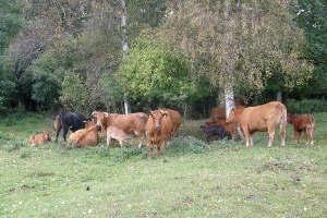 Krzyżowanie towarowe szansą dla mniejszych gospodarstw