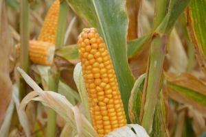 Złote Medale Polagra – Premiery dla roślin rolniczych