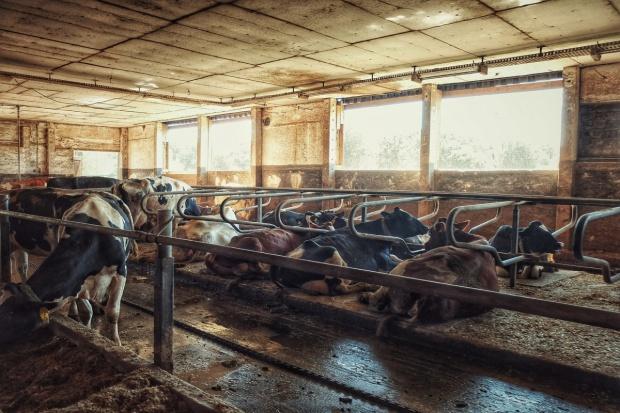 Rosja: Minister obiecał większe wsparcie dla branży mleczarskiej