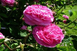 CIECH SA wzbogaca portfolio o markę w kategorii Home & Garden