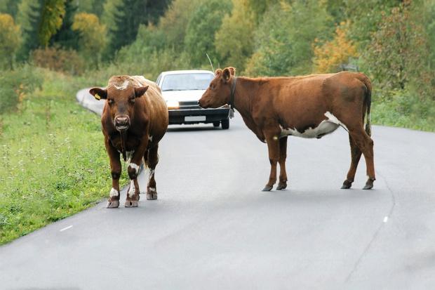 Konsekwencje niedopilnowania zwierząt - cały artykuł