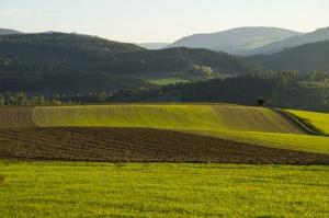 W 2015 r. wzrosła powierzchnia zasiewów o 3,2 proc.