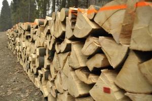 Leśnicy sprzedali najcenniejsze drewno