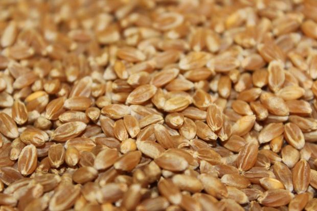 Kolejne obniżki cen skupu zbóż