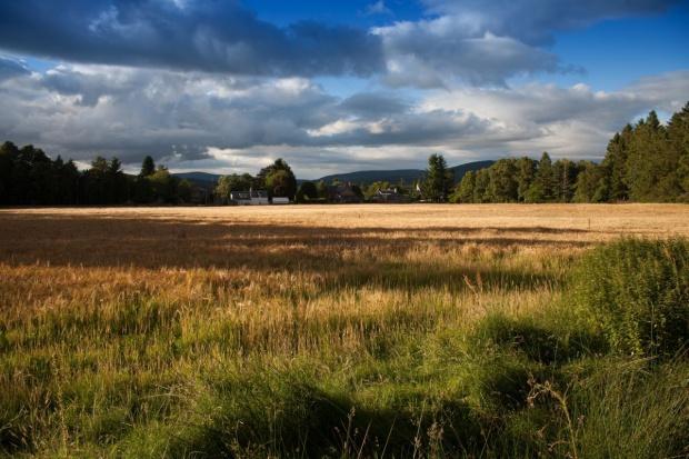 """Ekspertka z IERiGŻ o projekcie o ustroju rolnym: Przypomina """"ręczne sterowanie"""""""