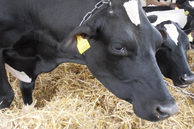 UE: Ograniczenia w stosowaniu leków antybakteryjnych u zwierząt