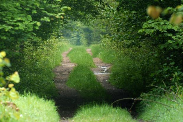 Nadleśnictwo Białowieża: W planie mniej cięć niż planowano