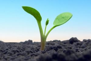 Rola próchnicy w glebie - nowe metody regulacji jej zawartości