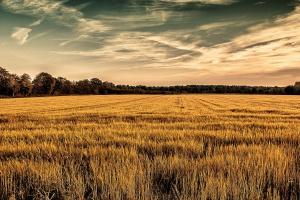 Strategie Grains podnosi prognozę eksportu pszenicy z UE w sezonie 2016/2017