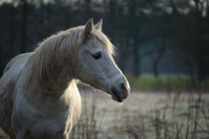 Projekt noweli ustawy dot. rejestracji koni - do drugiego czytania