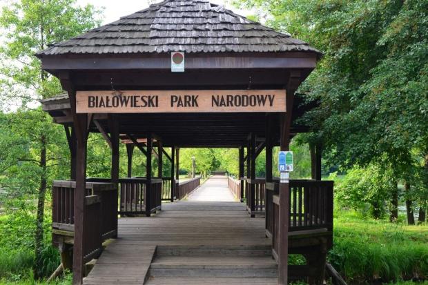 Puszcza Białowieska: Ruszyły patrole leśne Greenpeace