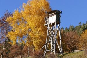 Projekt ustawy o szkodach łowieckich - do komisji