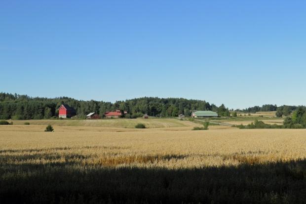 Finlandia: Spada liczba gospodarstw