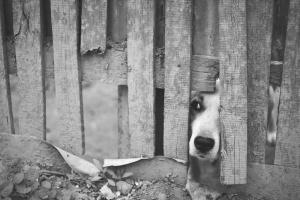 Dania zaostrza kary za okrucieństwo wobec zwierząt