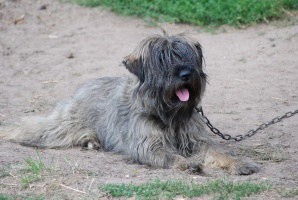 W Sejmie wraca temat zmian w przepisach dotyczących ochrony zwierząt