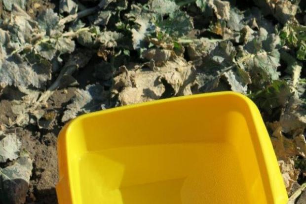 Spodziewane pierwsze naloty chowaczy – wystaw żółte naczynia