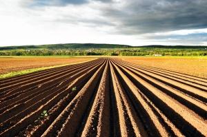 """Ministerstwo rolnictwa odnosi się do """"nieprawdziwych informacji PSL"""""""