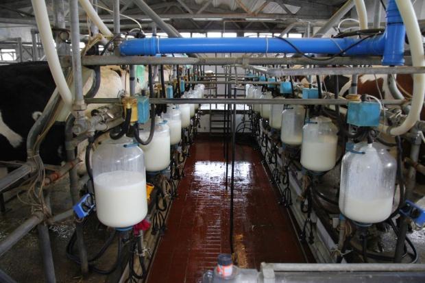 Ceny mleka w skupie najniższe od 2010 r.