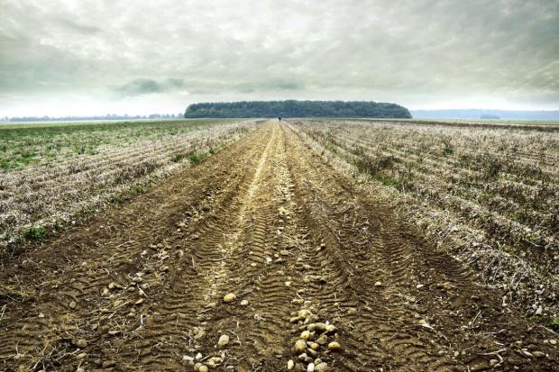 Ukraina planuje uwolnienie sprzedaży ziemi rolniczej od 2017 r.