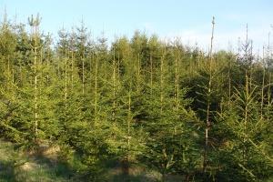 Warmińsko-mazurskie: Leśnicy posadzą w tym roku 22 mln drzew