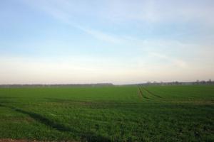 W fazie krzewienia warto dokarmić pszenicę mikroelementami