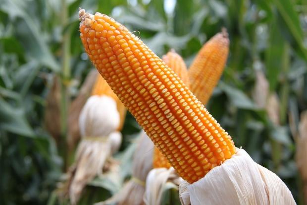 USA: Vermont wprowadza obowiązkowe oznaczenie GMO na etykietach
