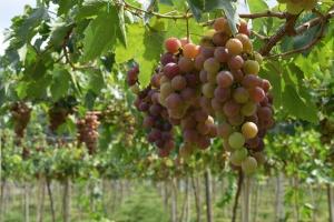 Mołdawscy rolnicy boją się niskich zbiorów