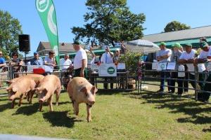 Prawie 5 mln zł na promocję wieprzowiny w 2016 r.
