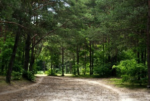 Rząd: Po 1 maja Lasy Państwowe będą miały prawo pierwokupu prywatnych lasów
