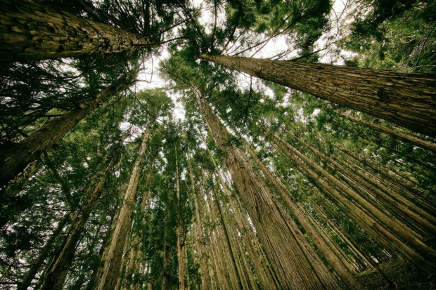 Na jakich zasadach Lasy Państwowe kupią lasy?