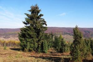 Lasy Podkarpacia ostoją dzikiej zwierzyny