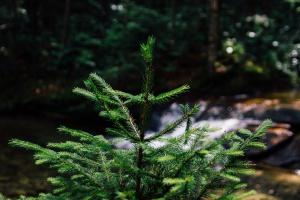 PGE wraz z Lasami Państwowymi posadzi nowe drzewa