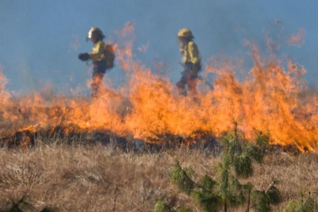 Prawie 20 tys. pożarów traw; za ich wypalanie grozi utrata dopłat