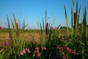 Biebrzański PN chce wydzierżawić w 2016 r. ok. 600 ha bagiennych łąk