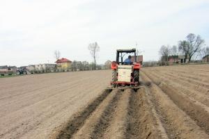 Ziemniaki lubią ogrzaną glebę