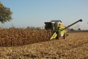 Ukraina: 2016 r. zbiory zbóż mniejsze od ubiegłorocznych