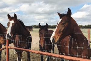 Nowela ustawy o systemie identyfikacji i rejestracji zwierząt - podpisana