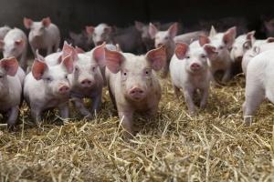 Copa i Cogeca promują branżę mięsną