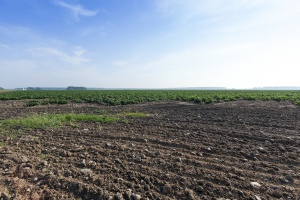 Izby Rolnicze chcą od nowelizacji ustawy dotyczącej obrotu ziemią