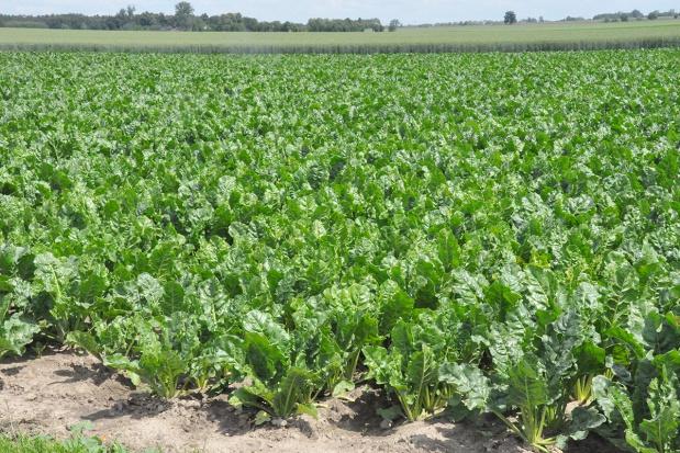 Łączenie ochrony herbicydowej i dokarmiania mikroelementami