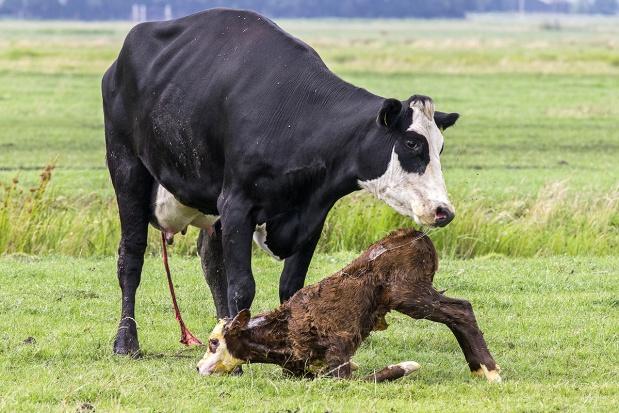 Pozażywieniowe czynniki wpływające na wyniki rozrodu