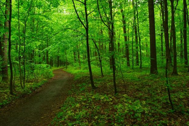 Szyszko: Polska liderem w zakresie zrównoważonego rozwoju