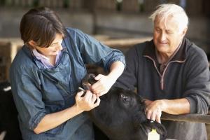 UE: Czy programy dotyczące chorób zwierząt są efektywne?