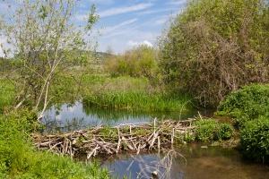Podlaskie: Po suchym roku, mniejsze wypłaty za szkody bobrowe
